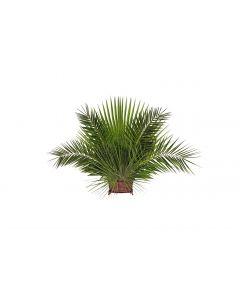 Palm Decoration Arrangement Suggestions