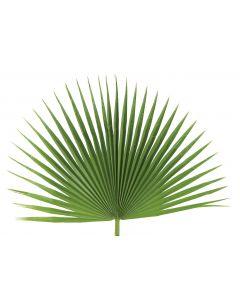 Fan Palm Altar Decor