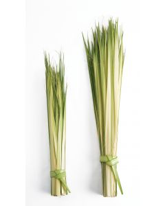 "(100-2400) Short DOUBLE Palm Strips 13"" to 20"""